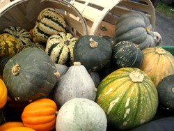 fall squashes
