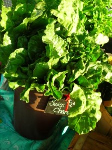 Swiss Chard available every week