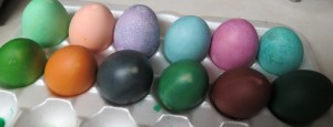 farm eggs dyed
